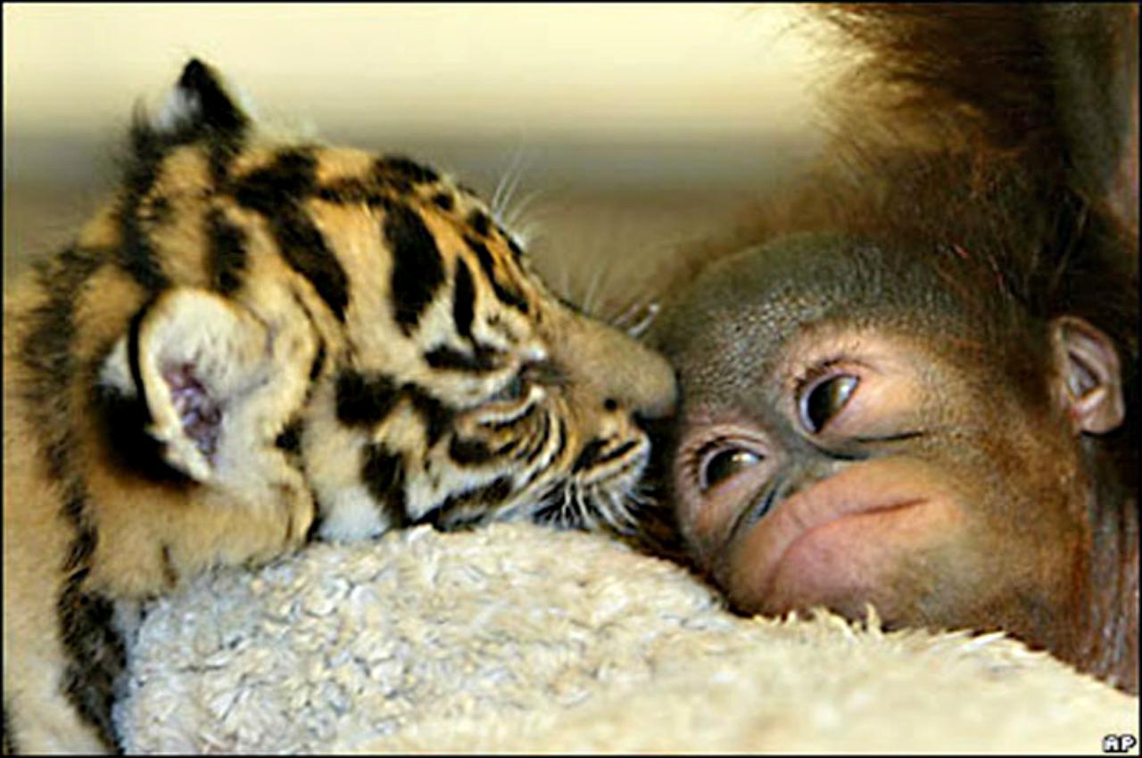 ασιατικό σεξ κατοικίδιο ζώο Τέρι Χάτσερ πορνό