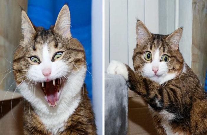 6d81371efc35 Τι προσπαθεί να μας πει η γάτα με το νιαούρισμά της